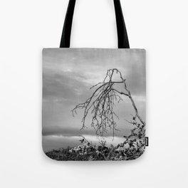 342 | bastrop state park Tote Bag