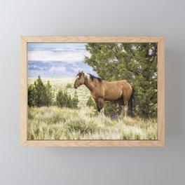 Stallion Relaxing on So Steens Mountain Framed Mini Art Print