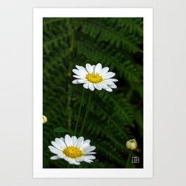 White Flower. Art Print