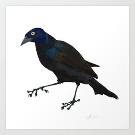 Common Grackle Art Print