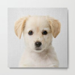 Golden Retriever Puppy - Colorful Metal Print