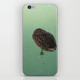 Peaceful Afternoon Siesta - duck napping on the water iPhone Skin