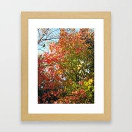 Autumn Leaves I Framed Art Print