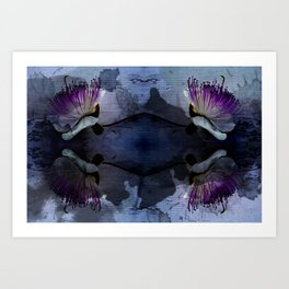 caper lily blue Art Print
