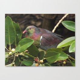 Wood Pigeon Colour Canvas Print