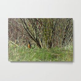 Little Birdie In The Bush Metal Print