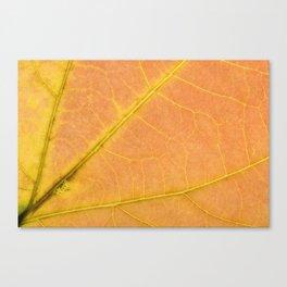 Sassafras Leaf Canvas Print