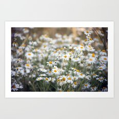 Wild Daisies 4134 Art Print