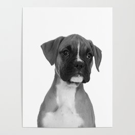Boxer Pup Poster