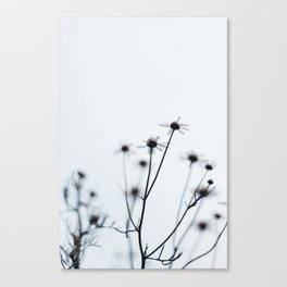 wildflower - he loves me, he loves me not Canvas Print