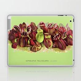 Cephalotus Follicularis (Albany Pitcher Plant)  Laptop & iPad Skin