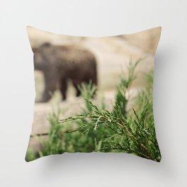 Mr Brown Bear Throw Pillow