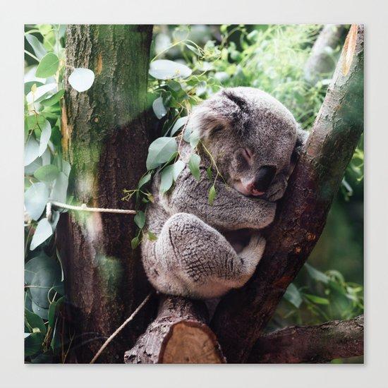 Cute Koala relaxing in a Tree Canvas Print