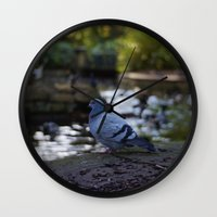 pigeon Wall Clocks featuring Pigeon by Elliott Kemp Photography