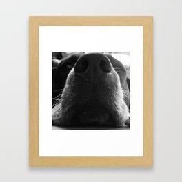 Beagle Nose Framed Art Print