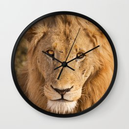Lion in early morning sunlight in Kruger NP, South Africa Wall Clock