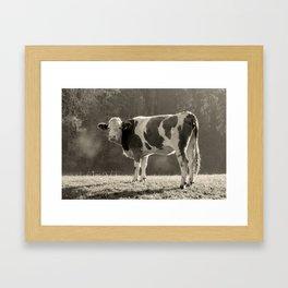 Cow in Field Framed Art Print