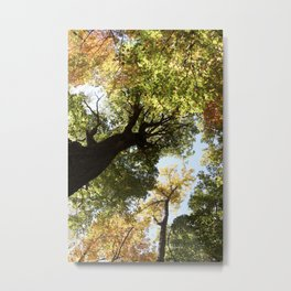 Fall Canopy - Woodland Trees Metal Print