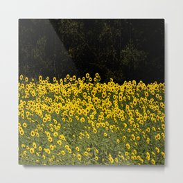 Sunflower Field On A Dark Background #decor #buyart Metal Print