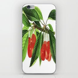 Red Cherries Vector on White Background iPhone Skin