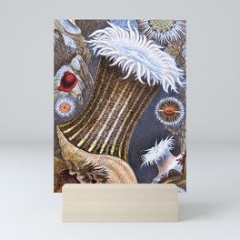 Philip Henry Gosse - A history of the British sea-anemones and corals 2 - Digital Remastered Edition Mini Art Print