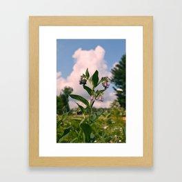 Healing Comfrey Plant with Flowers Framed Art Print