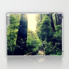 Muir Woods Path 2 Laptop & iPad Skin