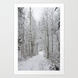 Snow Covered Trees Line The Path Art Print