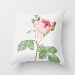 Vintage Pink Cabbage Rose Illustration Throw Pillow