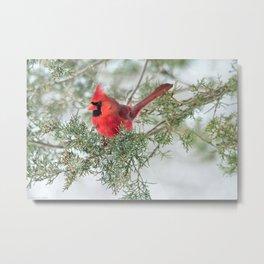Cocky Cardinal Metal Print
