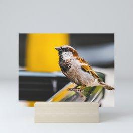 Summer Sidewalk Nature Bird. Photograph Mini Art Print