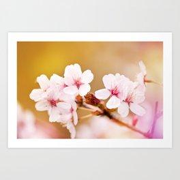Blooming fairy cherry tree flowers Art Print