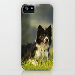 Border Collie In A Field iPhone Case