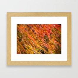 Japanese Maple in Autumn Photography Framed Art Print
