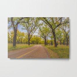 Cottonwoods, Theodore Roosevelt NP, ND 4 Metal Print