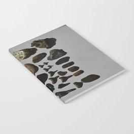 Beach Day Fossils Notebook