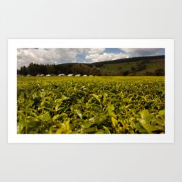 Tea Leaves Art Print