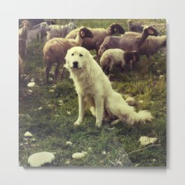 Herding dog, female, south of Israel, scaned sx-70 Polaroid Metal Print