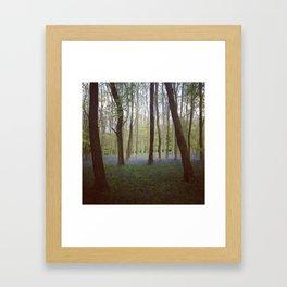 Bluebell Woods - Aldbury Common Framed Art Print