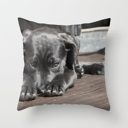 Pet Dog Puppy Throw Pillow