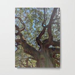 Angel Oak Tree- plants IV Metal Print