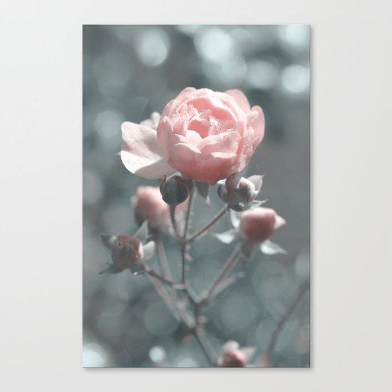 Romantic rose at Backlight- roses Canvas Print
