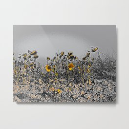 Sunflowers in the Camino de Santiago Metal Print