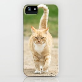 Ginger Cat Walking iPhone Case