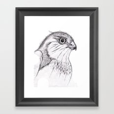 Aguila Framed Art Print