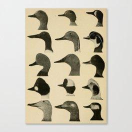 Vintage Duck Heads Canvas Print