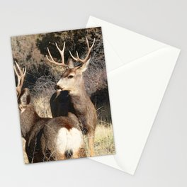 Watercolor Deer, Mule 16, Crestone, Colorado, The Disturbance Stationery Cards