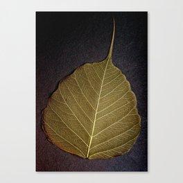 Life Lines * Olive * Thailand Bodhi Leaf Skeletons * Fine Art Print  Canvas Print