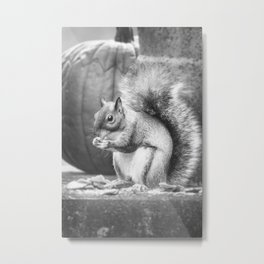 The Squirrel and the Pumpkin 2 Metal Print
