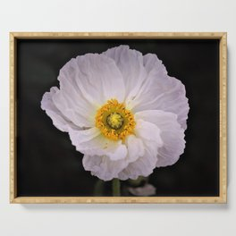 White with Yellow Center  Poppy by Reay of Light Photography Serving Tray